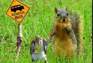 Squirrels1